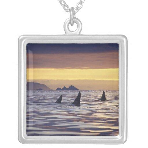 Orca o orcas collar plateado
