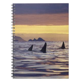 Orca o orcas libros de apuntes con espiral