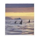 Orca o orcas libreta para notas