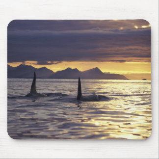 Orca o orcas mousepads