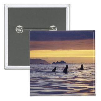 Orca o orcas pins