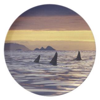 Orca o orcas plato para fiesta