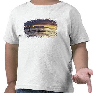 Orca o orcas camiseta