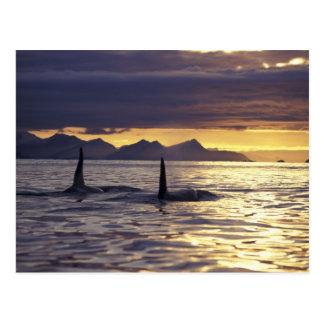 Orca o orcas postal