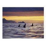 Orca o orcas postales