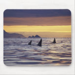 Orca o orcas tapete de ratones