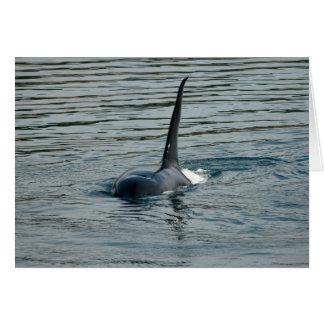 Orca on the hunt card