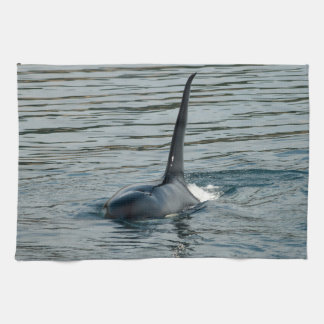 Orca on the hunt towel
