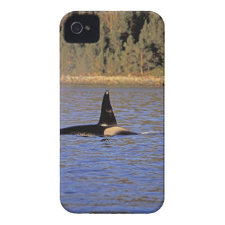 Orca or Killer whale. Blackberry Cases