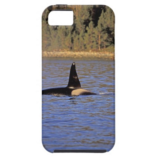 Orca or Killer whale. iPhone SE/5/5s Case