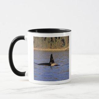 Orca or Killer whale. Mug