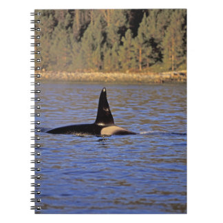 Orca or Killer whale. Note Books