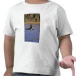 Orca or Killer whale. Tee Shirt