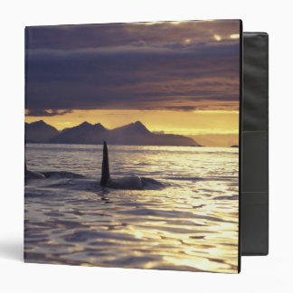 Orca or Killer whales 3 Ring Binder