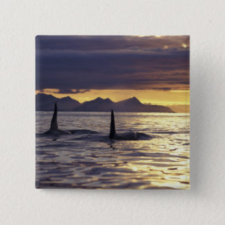 Orca or Killer whales Button