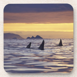 Orca or Killer Whales Coaster