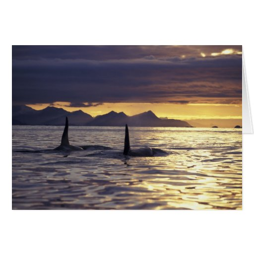 Orca or Killer whales Greeting Card