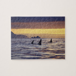 Orca or Killer Whales Jigsaw Puzzle