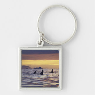 Orca or Killer Whales Key Chain