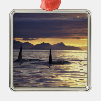 Orca or Killer whales Metal Ornament