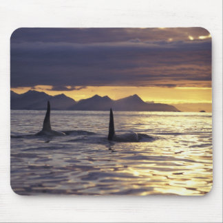 Orca or Killer whales Mouse Pad