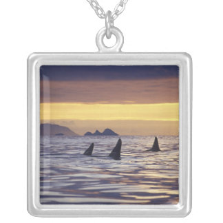 Orca or Killer Whales Jewelry
