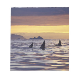 Orca or Killer Whales Note Pad