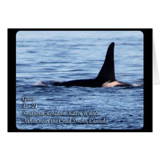 Orca; Orca residente meridional del asesino Whale- Tarjeta De Felicitación