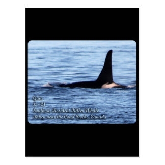 Orca; Orca residente meridional del asesino Whale- Postales