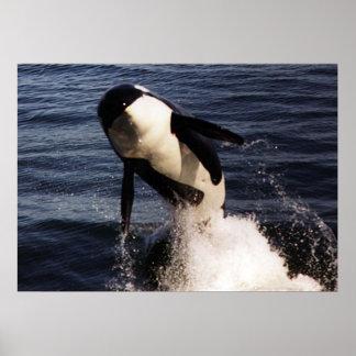 Orca Impresiones