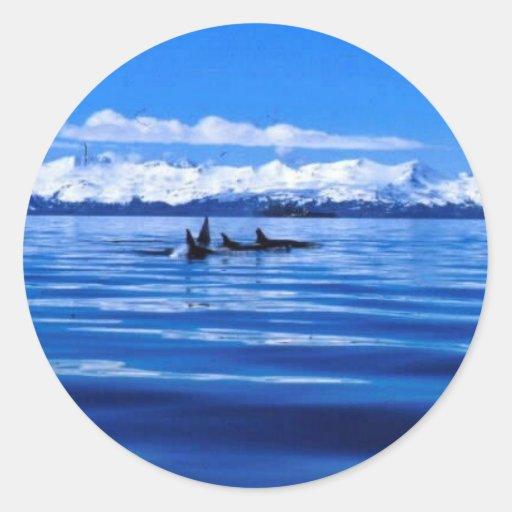 Orca Etiquetas Redondas