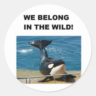 Orca pertenecemos en el diseño salvaje pegatina redonda