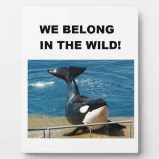 Orca pertenecemos en el diseño salvaje placas
