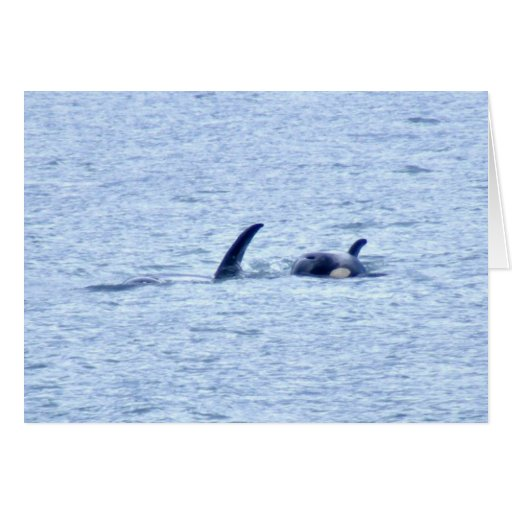 Orca Photography Cards