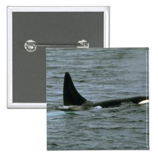 Orca Pins