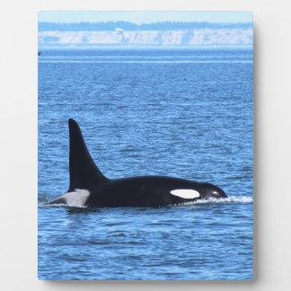 Orca Placas Para Mostrar