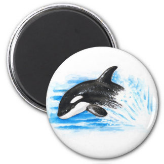 Orca Playing Magnet