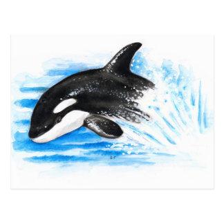 Orca Playing Postcard