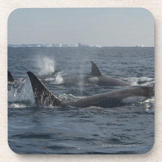 orca posavaso
