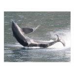 Orca que viola en Alaska Postal