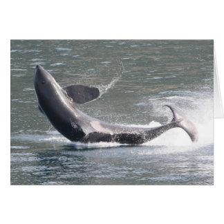 Orca que viola en Alaska Tarjeta De Felicitación