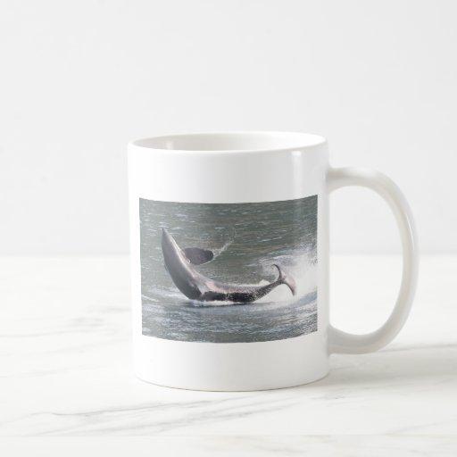 Orca que viola en Alaska Taza De Café
