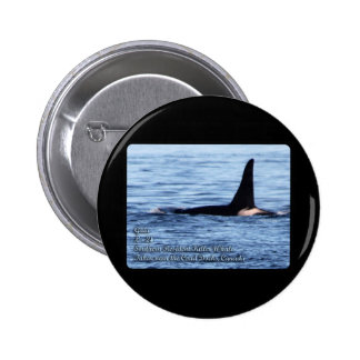 Orca;Southern Resident Killer Whale-L28 Orca Buttons
