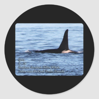Orca;Southern Resident Killer Whale-L28 Orca Classic Round Sticker