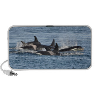 Orca Speaker