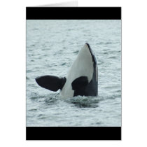 Orca Spyhop Greeting Card