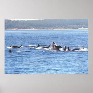 Orca Superpod Framed Print