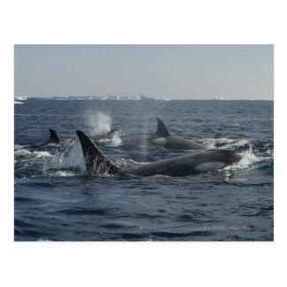 orca tarjeta postal