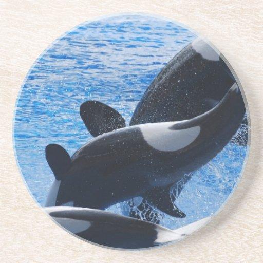 Orca Trio Coaster