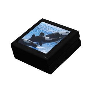 Orca Trio Gift Box